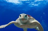 Grootste schildpad ooit