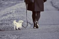 Hond lijkt op mens