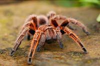 Politie rukt uit voor spin