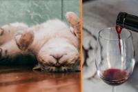 wijn voor je kat