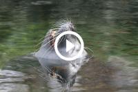Zeeleeuw pakt klein meisje