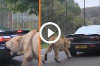 leeuw hap sportauto